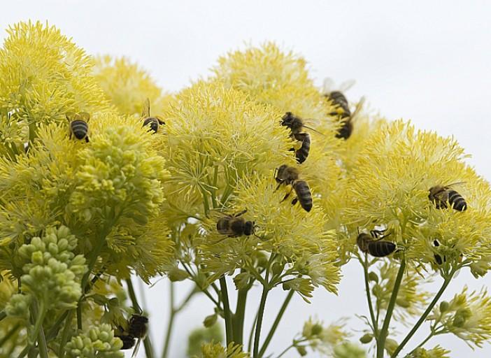 5 choses à savoir sur les plantes mellifères