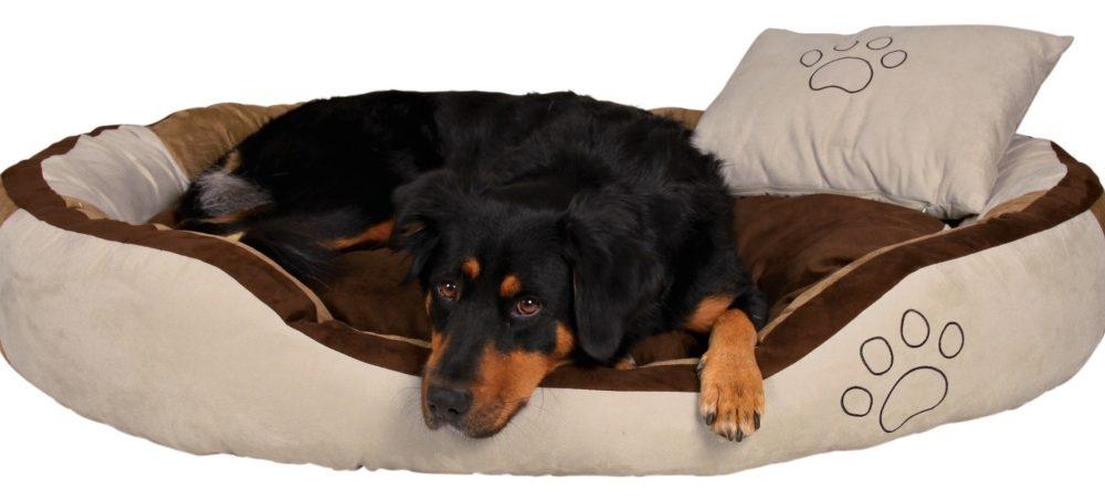 Comment choisir le panier de son chien ?